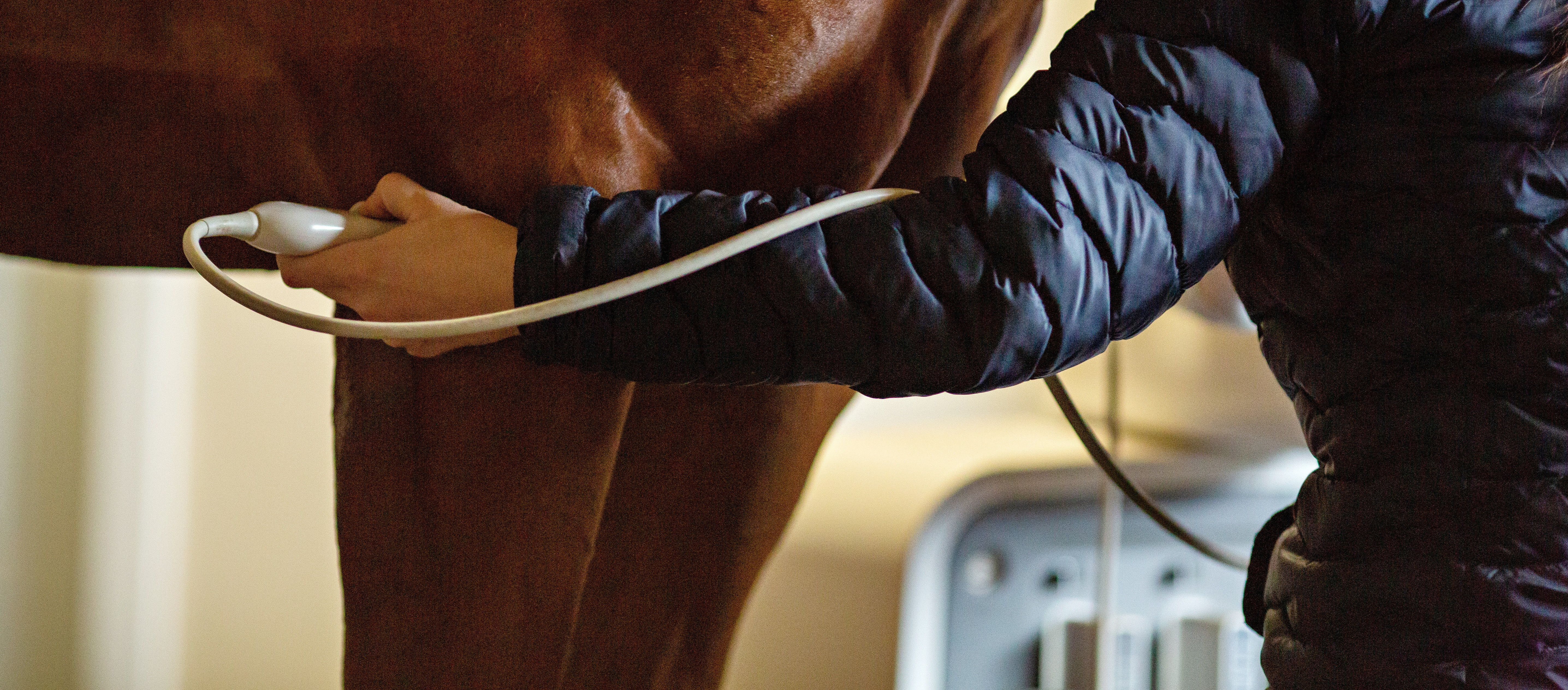 ultrasound - radiology equipment for equine health